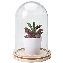 Koopman Umelá rastlina v skle Wilma, 19 cm